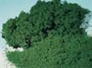 76981 Флок ярко-зеленый мелкий 1000 мл